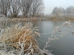 2015 Winter is here. Time to plan for 2015 Winter, Winter Is Here, Pond, How To Plan, Natural, Beach, Water, Outdoor, Gripe Water
