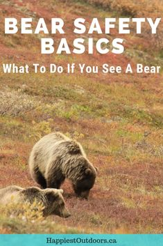 Bear Safety for Hikers, Campers and Backpackers. What to do if you see a bear. Hiking in bear country. How to stay safe in bear country. Camping in bear country. Hiking Tips, Camping And Hiking, Hiking Gear, Hiking Backpack, Camping Gear, Tent Camping, Camping Hacks, Camping Foods, Camping Supplies