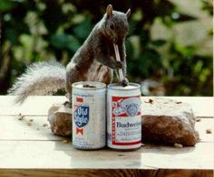 """The """"double-fisting is more efficient"""" squirrel: 
