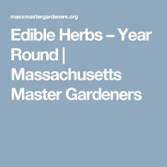 Edible Herbs – Year Round   Massachusetts Master Gardeners