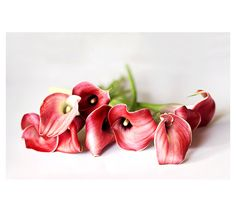Red Calla Lily Photo Flower Photography Modern by semisweetstudios, $18.00