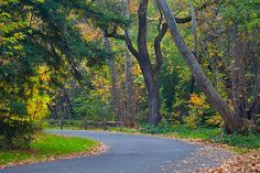 My Taken Path in my hometown of Chico, CA