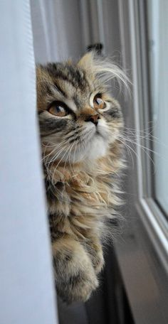 Cute or not ? kitten