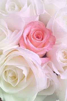 Ideas Garden Wallpaper Iphone White Flowers For 2019 Beautiful Rose Flowers, Love Rose, Exotic Flowers, Amazing Flowers, My Flower, White Flowers, Beautiful Flowers, Cut Flowers, Dried Flowers