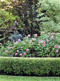 neatly clipped boxwood hedge contrasts nicely with less-formal plants. More importantly, the hedge hides the base of the roses, which are often bare