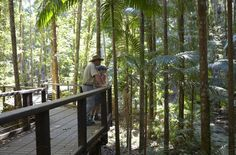 Under the boardwalk is pretty spectacular at Wanggoolba Creek Photo: Tourism Australia  #fraserexplorer #fraserisland #queensland #australia www.fraserexplorertours.com.au