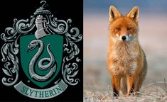 ON POTTERMORE I LITERALLY GOT SLYTHERIN WITH A FOX PATRONUS BUT THEN IT GLITCHED AND WHEN I RETOOK IT I GOT A SPARROW