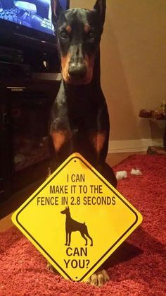 ...and I will spend most of my day barking at the slightest noise or movement outside the house. *sigh*
