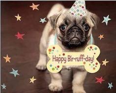 Happy Birthday Pug, Happy Birthday Pictures, Happy Birthday Greetings, Birthday Images, Free Pictures, Dog Pictures, Free Pics, Cute Pugs, Funny Pugs
