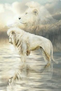 White Lion - Reflection Of Light art by Carol Cavalaris. Lion of Judah, heaven, beautiful painting. Lion And Lioness, Lion Of Judah, Beautiful Lion, Animals Beautiful, Lion Pictures, Animal Pictures, Lion Tigre, Animals And Pets, Cute Animals