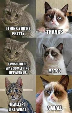 Do you love Grumpy cat. If you do, These Grumpy cat Memes work for you.These Grumpy cat Memes work are so funny and humor. Grumpy Cat Quotes, Funny Grumpy Cat Memes, Cat Jokes, Funny Animal Jokes, Cute Funny Animals, Funny Animal Pictures, Funny Cats, Funny Jokes, Grumpy Kitty