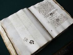 15th Century Cat Leaves Paw Prints On Owner's Manuscript