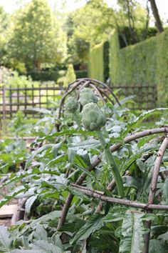 Willow cloches | Prieure D'Orsan