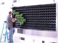 So easy to make the most easy system of the world. Made in the Netherlands VersaWall Diagram www.suiteplants.com