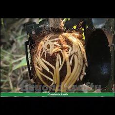 Growing Plants, Growing Vegetables, Vegetable Garden, Garden Plants, House Plants, Aquaponique Diy, Garden Projects, Garden Tools, Garden Design Plans