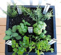 tips for planting a container herb garden gardens sodas and decks