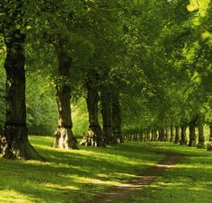 Clumber Park - Worksop - Nottinghamshire - England  Looks like part of Lime Tree Avenue to me. #minniemoonstone