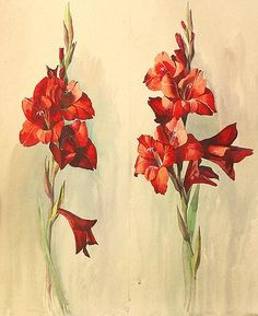 Gladioluses flower - watercolor painting, this would be a lovely tattoo