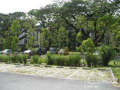 carpark design landscape - Tìm với Google