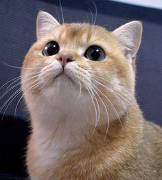 (📷 @gyoza.dd   ig) #petclubsa #nature #photography #catcontent #katzen #katzenliebe #catperson #catsoftheworld #cutekitten #instakatze #katt #cute #pet #petsofinstagram #catsofinstagram #catstagram #catoftheday #instacat #catlovers #instagood #catslove #catlover #caturday #thedailykitten #catlovers #catsofinsta #animals #adoptdontshop #worldofcutepets #cats Kittens Cutest, Cat Day, Cats Of Instagram, Pet Supplies, Hug, Cat Lovers, Nature Photography, Adoption, Cute Animals