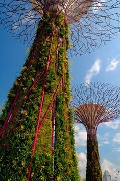 Supertrees in Singapore's Gardens by the Bay . . . a public garden opening in June 2012 (they look like Baobob trees)