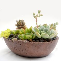 Desert Paradise Cement Oval Bowl Planter with Succulents by Rotd Creations available at Withal now. The place to get inspired goods by local makers. Cement Planters, Garden Planters, Succulents Garden, Green Apartment, Succulent Arrangements, Succulent Ideas, My Ideal Home, Desert Plants, Plant Needs