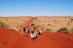 simpson desert australia - Google Search