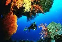 Diving One day Trip at Bungalow Bay North, Racha Yai Divesites (Tuesday Trip) Price Start From 3,800 THB - per person