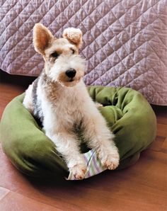 DIY Dog Beds - DIY Sweatshirt Dog Bed - Projects and Ideas for Large, Medium and Small Dogs. Cute and Easy No Sew Crafts for Your Pets. Pallet, Crate, PVC and End Table Dog Bed Tutorials http://diyjoy.com/diy-dog-beds