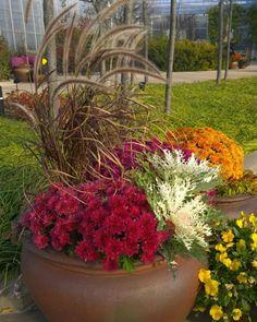 Fall Flower Pots, Fall Flowers, Unique Flowers, Unique Colors, White Flowers, Beautiful Flowers, Fall Planters, Garden Planters, Garden Boxes