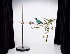 Chlorophanes spiza, 2010 Pigment ink print 74 x 96 cm Edition of 7 Food Sculpture, Sculptures, Helsinki, Bird On Branch, Morning News, School Photos, Triptych, Pigment Ink, Still Life Photography