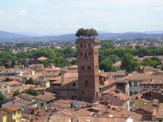 Torre Guinigi: The Tower with Oak Trees on the Top ~ Kuriositas