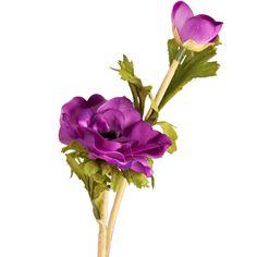 Anemone Purple