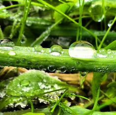 Leaf Green Water droplets