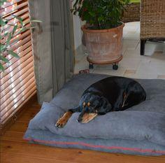 Das Hundekissen mit dem passenden Kopfkissen ist perfekt für einen Mittagsschlaf:-) The dog cushion with the head pillow is just perfect for a little nap:-)