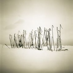 Hooked Grass by Eyeʂ, via Flickr