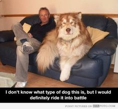 """""""I need a horse!"""" """"We don't have horses.. Just cats and dogs..."""" """"Then give me one of those large enough to ride.."""""""