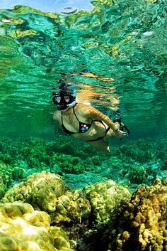 Dry Tortugas National Park, Florida; I have snorkeled these waters and loved it. Saw the biggest lobster ever here in Dry Tortugas off Loggerhead Key. Big as my thigh, unreal !~!