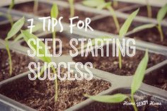 Seed starting is a great way to get a jump start on spring planting, save some money and get your gardening fix! Here are 7 tips to ensure your success.