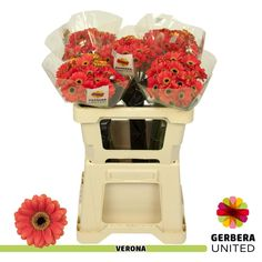 Buy wholesale Red GERMINI PICCOLINI VERONA for delivery direct to any UK address - wholesaled in Batches of 60 stems. Ideal for flower arrangements & wedding flowers. No minimum order required - Floral accessories also available. Wedding Flower Arrangements, Wedding Flowers, Florist Supplies, Gerber Daisies, Flowers Delivered, Flower Food, Gerbera, Cut Flowers, Amazing Flowers