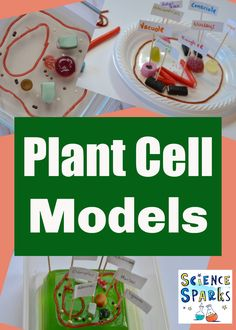 Easy and edible plant cell models - plant science for kids Preschool Science Activities, Science Experiments Kids, Science For Kids, Science Projects, Steam Activities, Science Ideas, School Projects, Biology For Kids, Chemistry For Kids