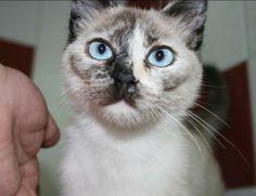 WENDY - Gato adoptado - AsoKa el Grande