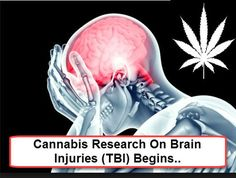 Cannabis+for+Traumatic+Brain+Injuries+(TBI)+Trials+Have+Started
