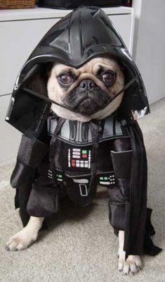 Darth Vader pug