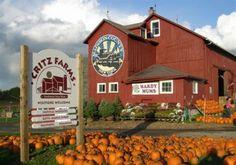 we love the pumpkin patch and corn maze!! Critz Farms - - - New York