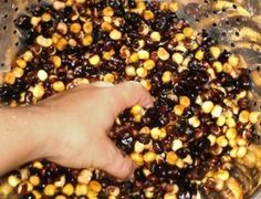 Traditional Native American Hominy Making: Step-by-Step Slideshow