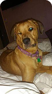Willingboro, NJ - Mastiff/Rottweiler Mix. Meet Stella Baby, a dog for adoption. http://www.adoptapet.com/pet/13613391-willingboro-new-jersey-mastiff-mix