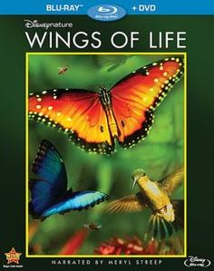 Wings of Life | 10-28-13
