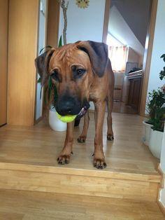 My dog ❤ #dog