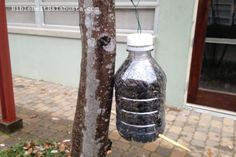 Up-cycled water bottle Bird Feeder made by kids